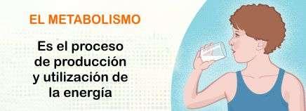 El Metabolismo Basal Que es el anabolismo