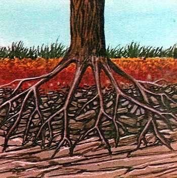 meteorizacion de las ramas de un arbol
