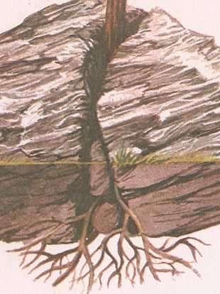 meteorizacion de una raiz de una planta