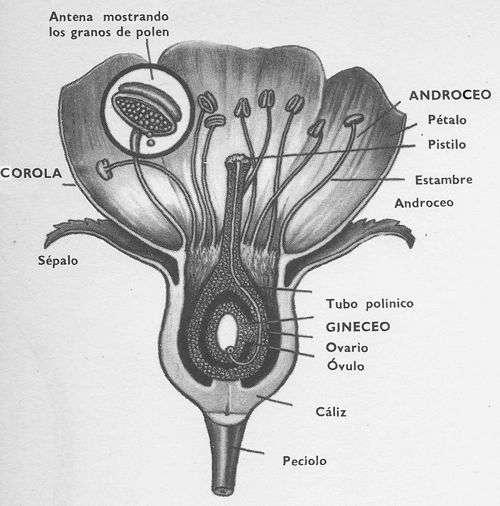 La Polinizacion de las Plantas:Agentes , Mecanismos y Tipos