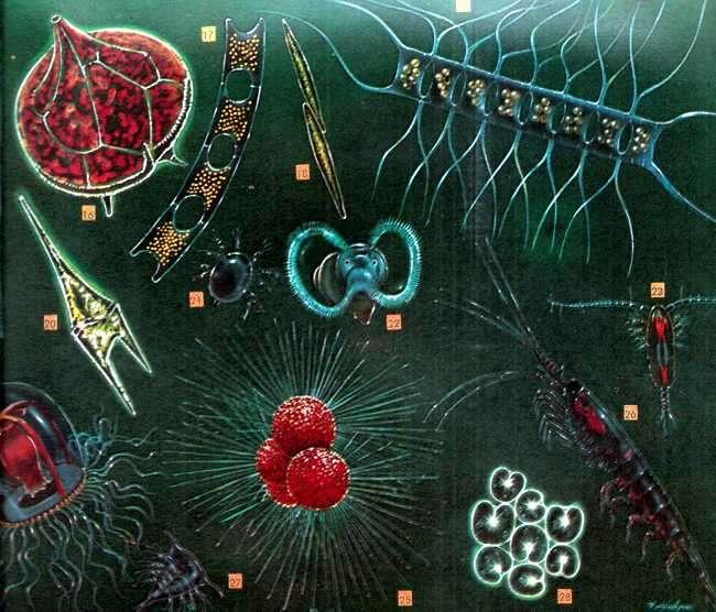 compuestos del placton