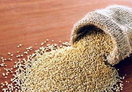 grano de quinua