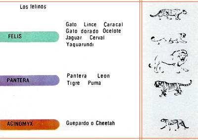 tabla de record de velocidad de los felinos