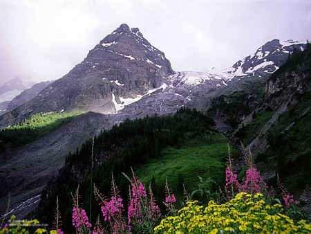 flora en la region alpina
