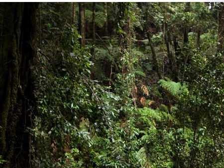 flora region forestal con selva