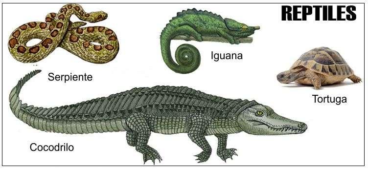 reptiles: serpiente, iguana, tortugas, cocodrilos