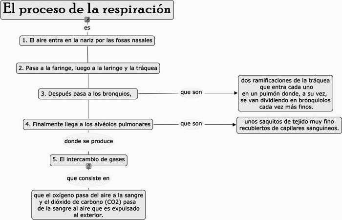 cuadro proceso de respiracion