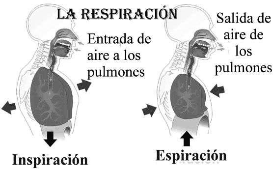 oxigeno respiracion