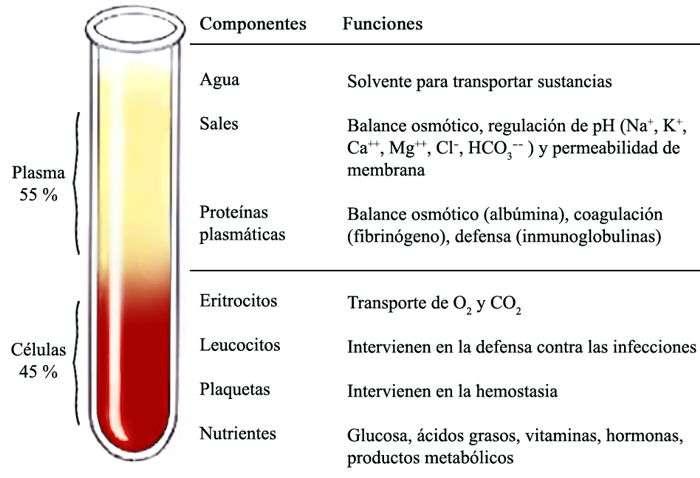 compuesto de la sangre