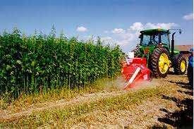 Sector Primario: Agricultura