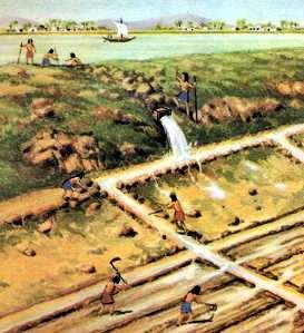 la agricultura: irrigacion de campos