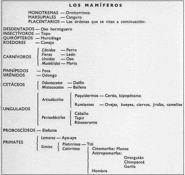 Características y Clasificación de los Mamíferos