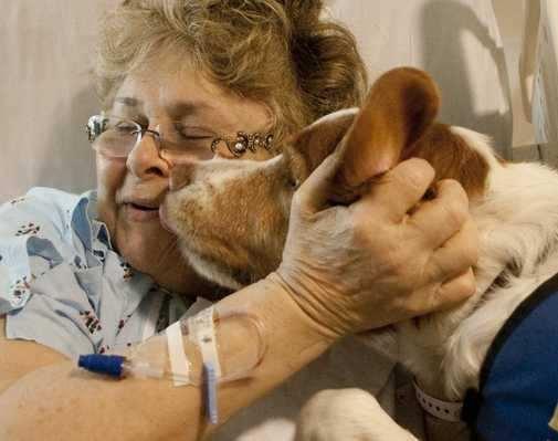 terapia con animales para curar enfermos