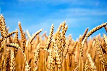 Las Riquezas de la Tierra Para La Alimentación