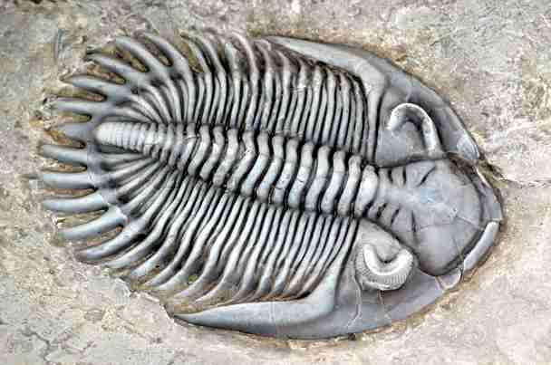 Resultado de imagen de trilobites