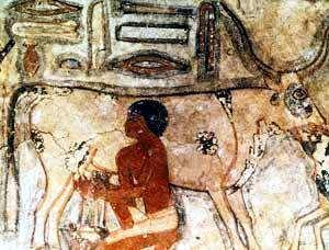 vaca en antiguo egipto