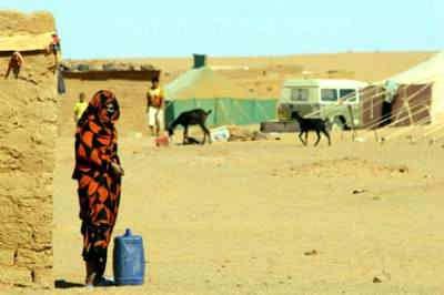 vida en el desierto cálido