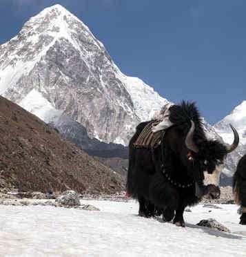vida en la montaña con nieve