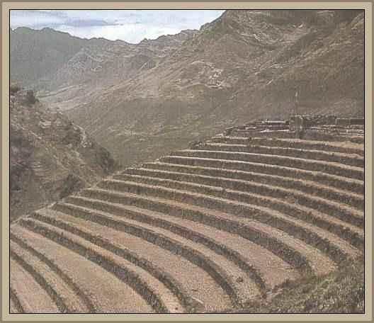 Organizacion De La Agricultura Inca Y Las Tierras De Cultivo