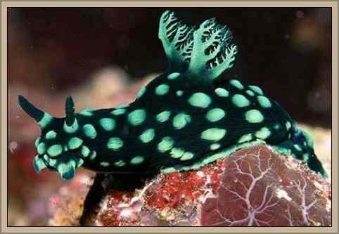 babosa de mar