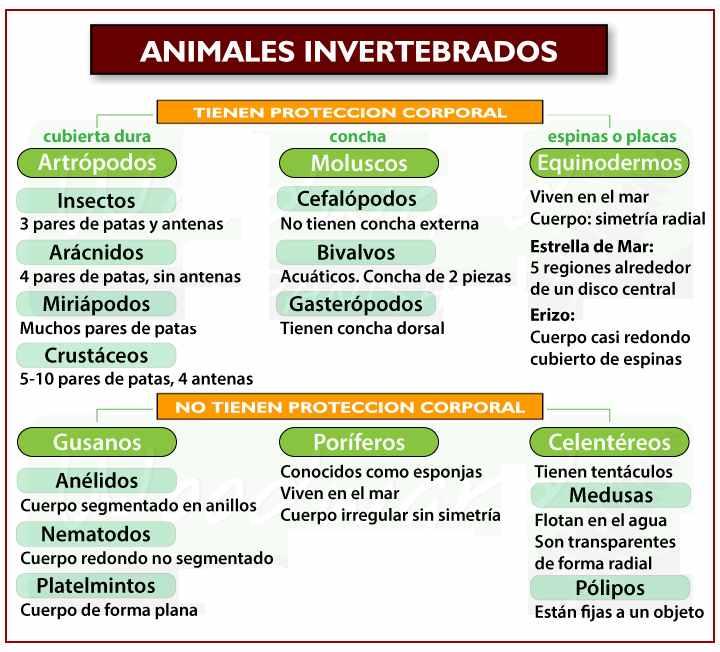 cuadro clasificacion de invertebrados