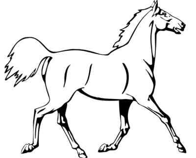 caballo animales para consumo