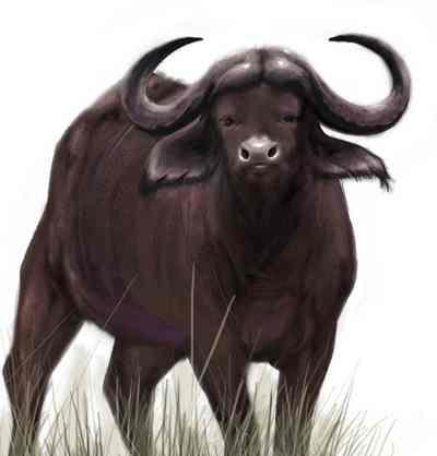 animales para consumo bufalo