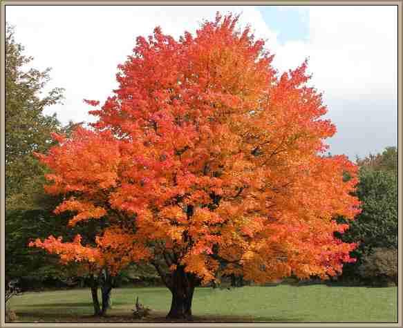 arbol en otoño hojas amarillas