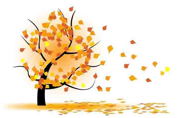 arbol caen las hojas