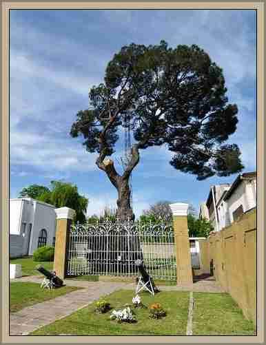 pino de san lorenzo Arboles Historicos y Celebres