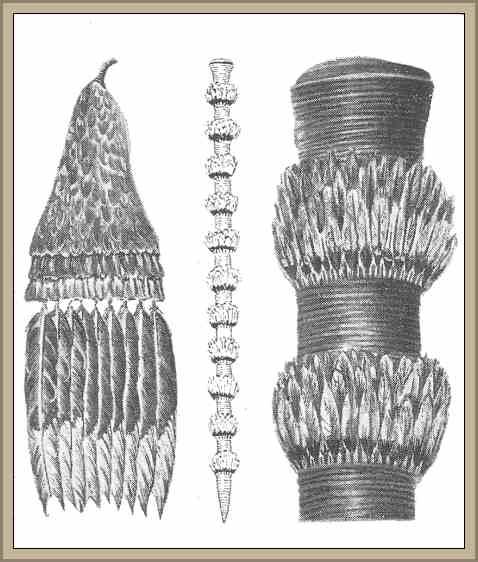 Arte Plumario Caracteristicas