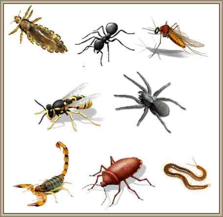 artropodos reino animal clasificacion