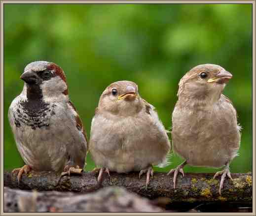 aves reino animal