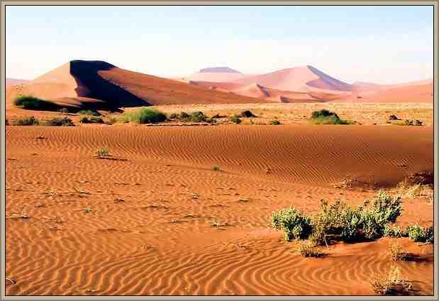 biomas del mundo desiertos