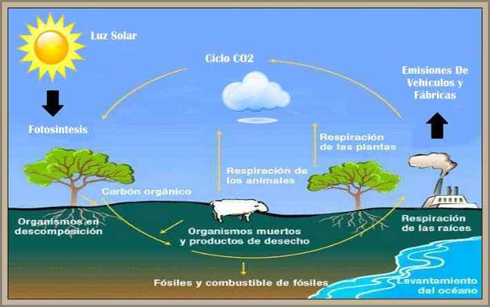 ciclo anhidrido carbonico