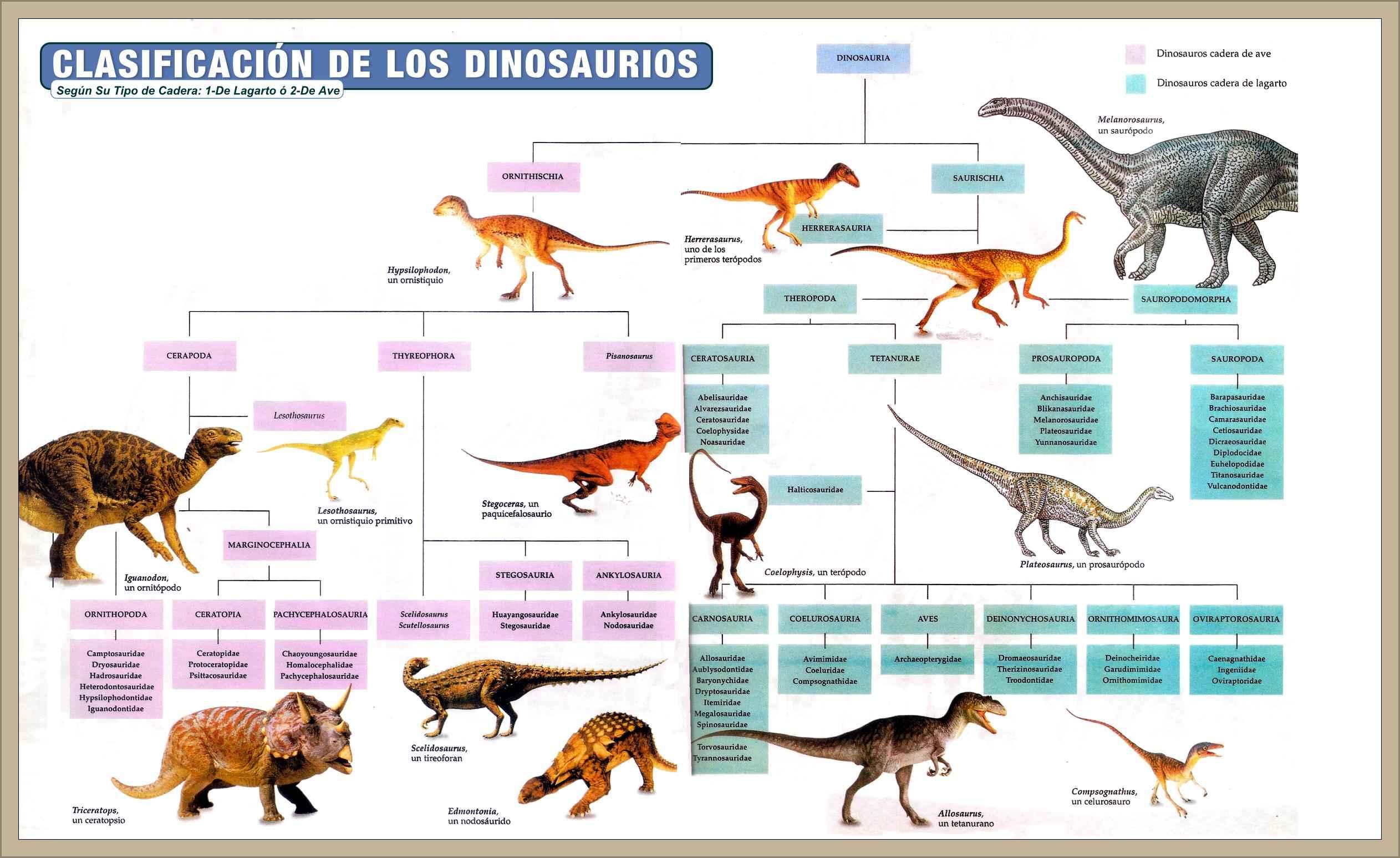 Tipos De Dinosaurios Caracteristicas Clasificacion Nombres Biografias E Historia Universal Argentina Y De La Ciencia Los que vivían en tierra firma eran enormes. tipos de dinosaurios caracteristicas