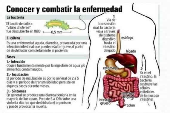 sintomas del colera