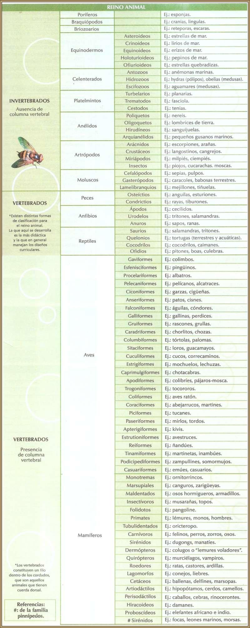 CUADRO SINOPTICO CLASIFICACION REINO ANIMAL