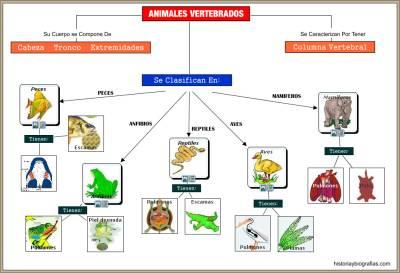 cuadro sinoptico vertebrados