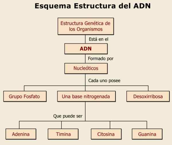 La Estructura Del Adn Historia Del Descubrimiento De Crick Y