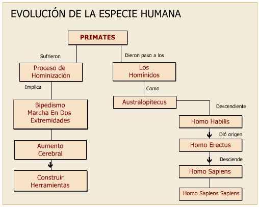cuadro evolucion humana