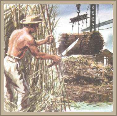 recolector de caña de azucar en Cuba
