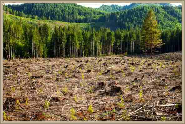 Historia de la Deforestación