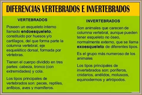 diferencias vertebrados e invertebrados