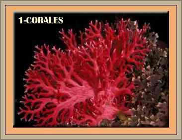 especies extinguidas corales