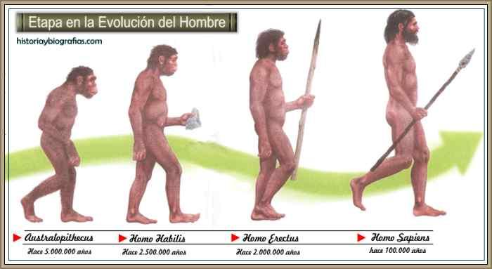 etapas evolucion del hombre