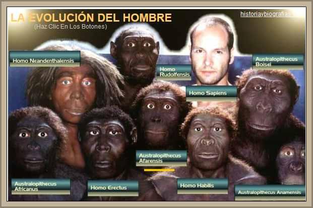 Origen y Evolución del Hombre:Caracteristicas de Cada Especie