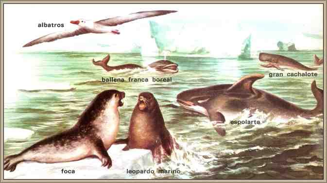 fauna de la antartida foca ballena albatros cachalote
