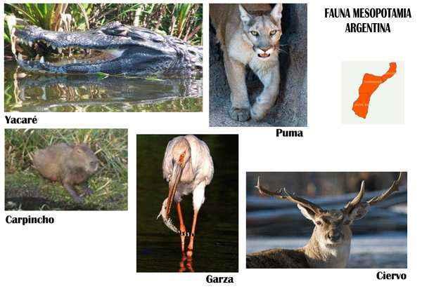 fauna de la mesopotamia argentina