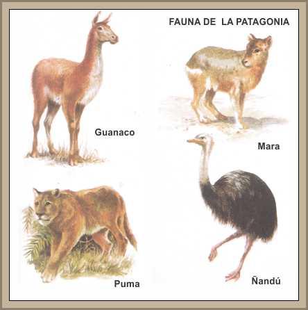 fauna de la patagonia